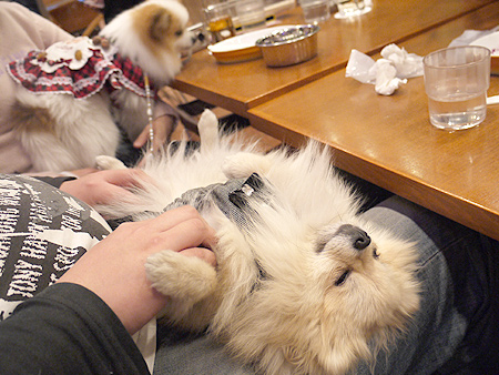 2010/1/16 Puppy'sDining2-14