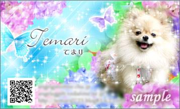 2010/2/5 ストロベリー名刺屋さんサンプル3