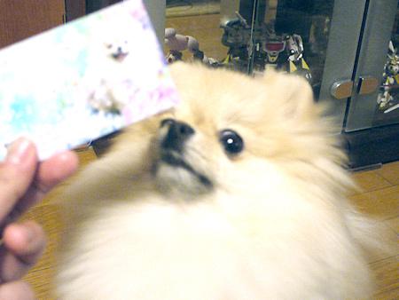 2010/2/5 ストロベリー名刺屋さん3