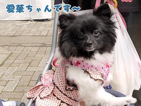 2010/4/24 わんわんカーニバル3