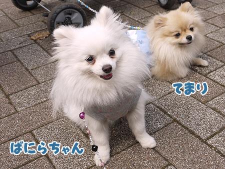 2010/4/24 わんわんカーニバル8