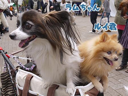 2010/4/24 わんわんカーニバル13