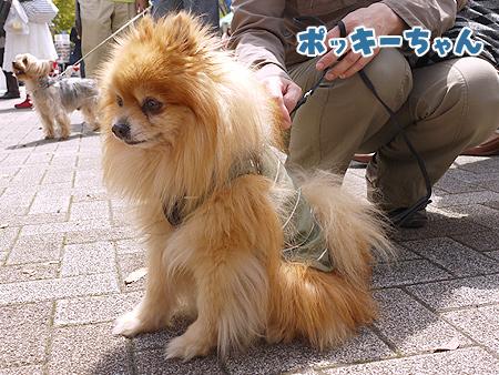 2010/4/24 わんわんカーニバル19
