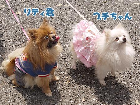 2010/4/24 わんわんカーニバル27