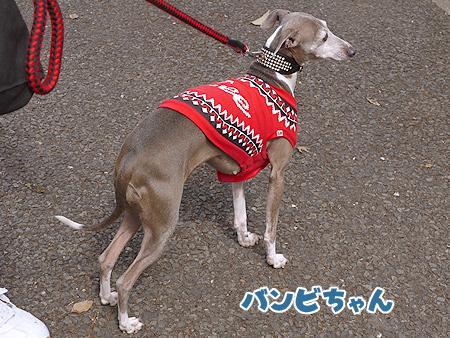 2010/4/24 わんわんカーニバル33