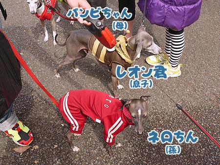 2010/4/24 わんわんカーニバル34
