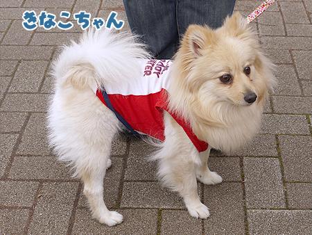 2010/4/24 わんわんカーニバル38