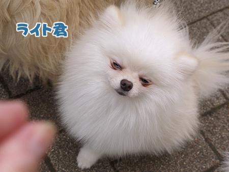 2010/4/24 わんわんカーニバル40