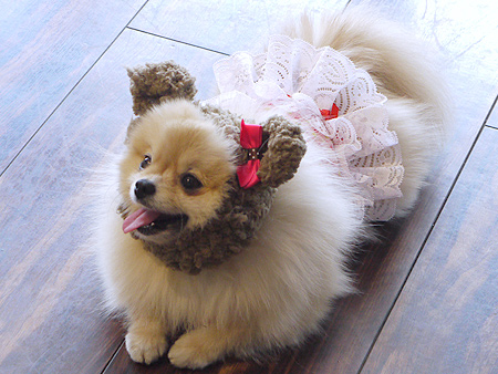 2010/5/9 Merry Dog1