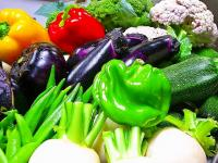 夏野菜 本日の収穫です