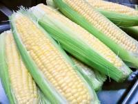 生食で食べられるトウモロコシ「味来」