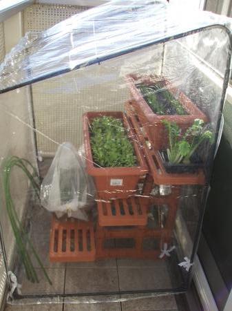プレ温室とフラワースタンド