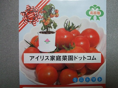 ミニトマト(レジナ?)の種