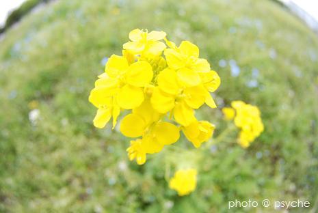 黄色い贈り物