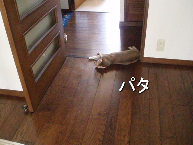 P7070574.jpg