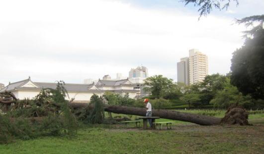 巽櫓と台風