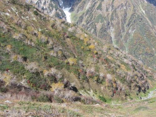 5八方池から登る途中の北方向の紅葉 (500x375)