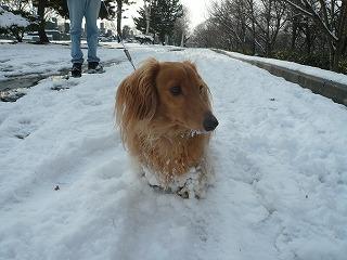 2011年12月の雪玉1