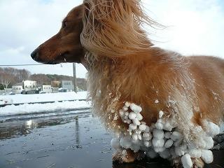2011年12月の雪玉2