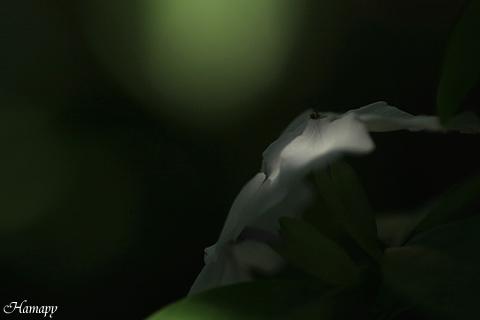 バンマツリ
