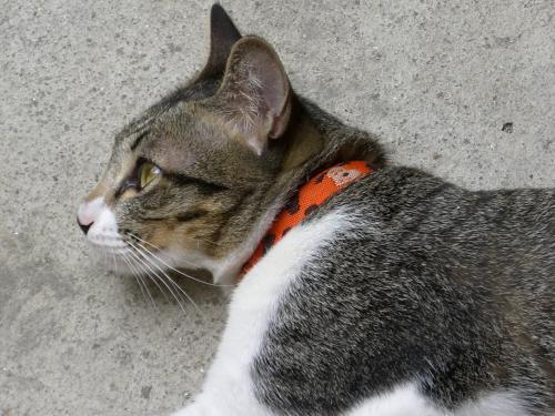 預かり猫さん1