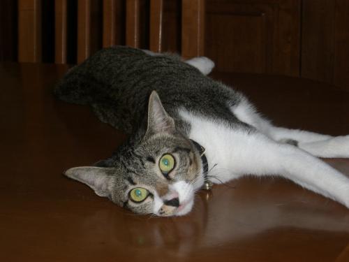 預かり猫さん3
