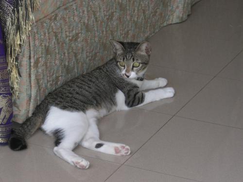 預かり猫さん4
