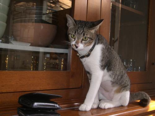 預かり猫さん2