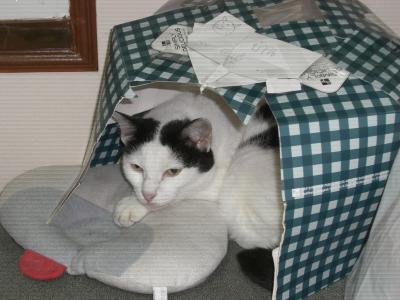 猫のお家3