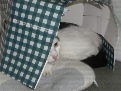 猫のお家1