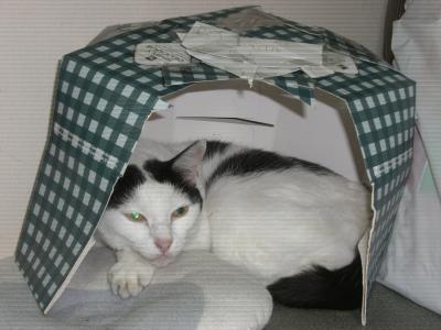 猫のお家2