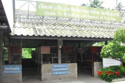 thai cat house