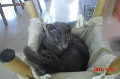 猫ハンモック1
