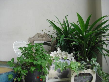 お気に入りの植物たち
