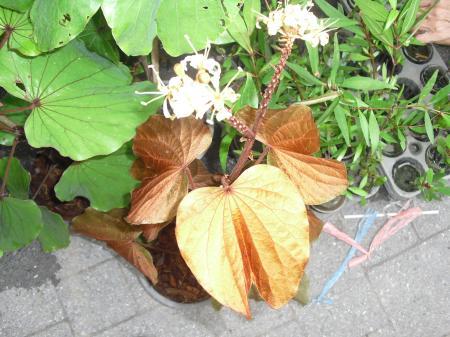植木市の植物1
