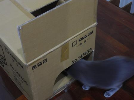 猫ハウス6