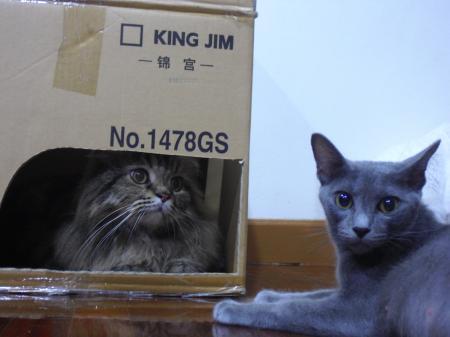 猫ハウス4