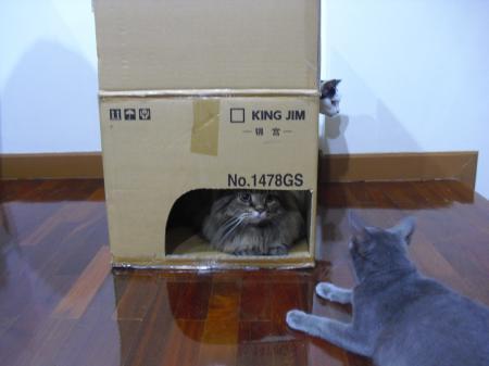 猫ハウス5