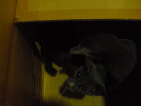 猫ハウス8