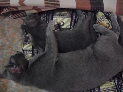 めいと子猫1