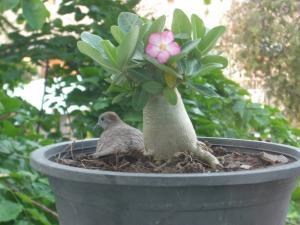 鉢植えの中の宝物