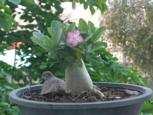 鉢植えの中の宝物 1