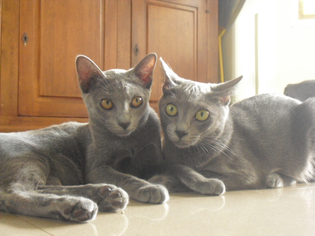 toro&momo3