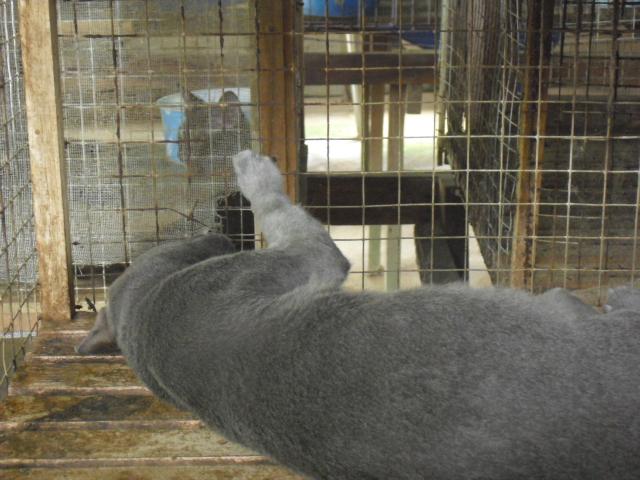 タイ猫センター4