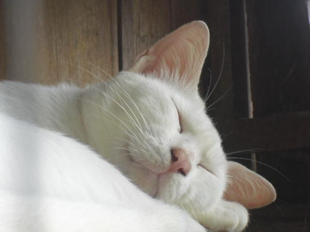 タイ猫センター2
