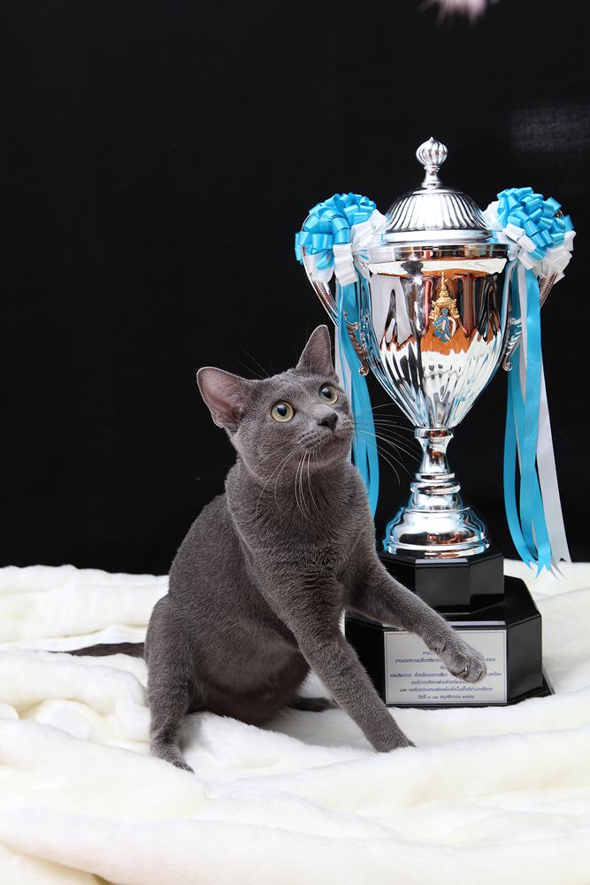 チャンピオン1