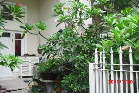 ジャングル4.1