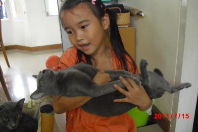 猫ハンモック2