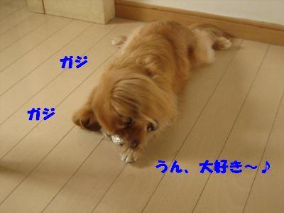 gazi3.jpg