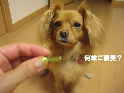 hosimamoru4.jpg